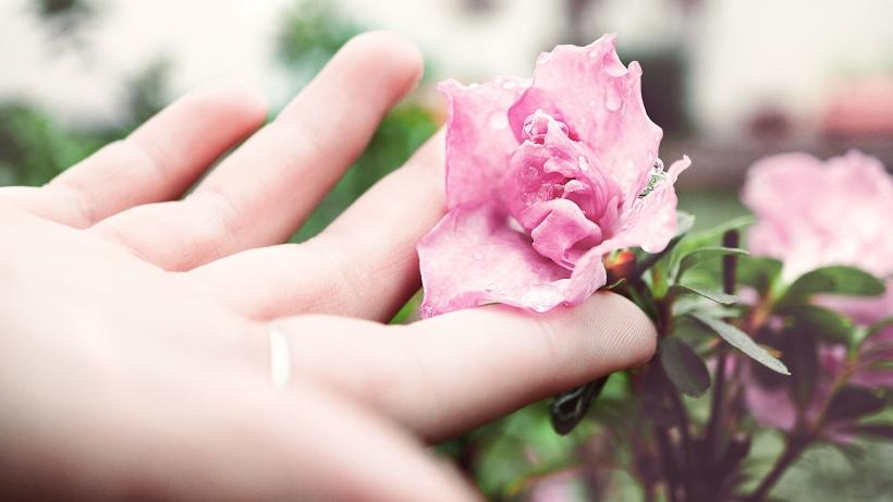 pink-peony.jpg